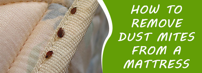 Remove Dust Mites From a Mattress Upper Swan