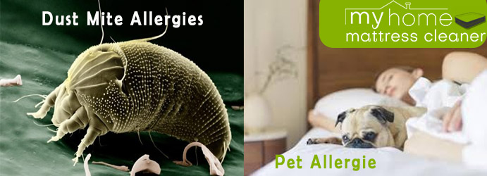 Mattress Pet Allergies